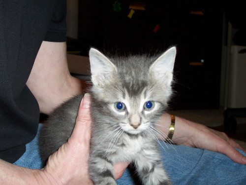 Ol_blue_eyes